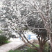 Our Almond Tree