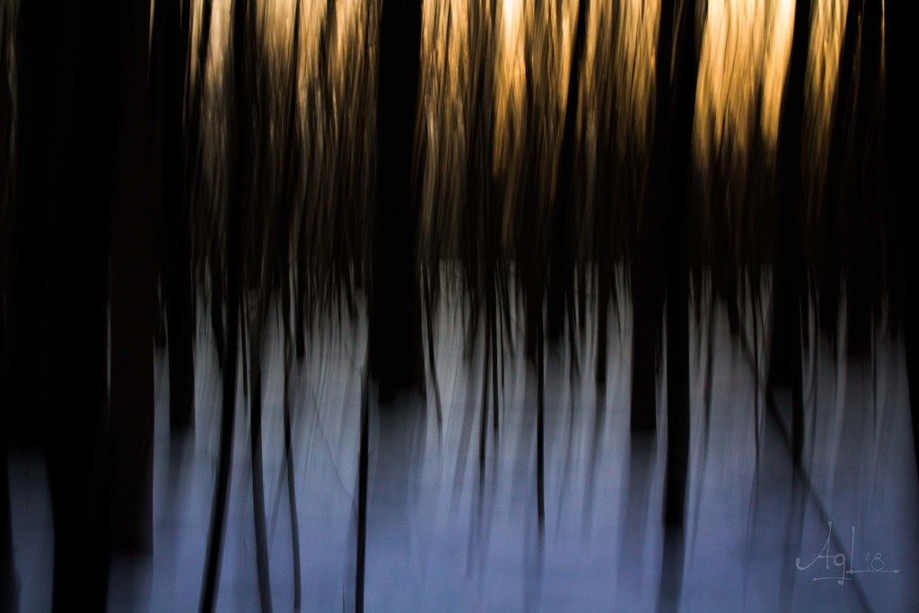 ICM forest by adi314