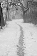 15th Feb 2018 - Icy Path BW