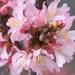 Spring DOF