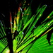 Palm leaf.   Am surrounded by them!! by 777margo