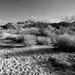 Desert Grotto