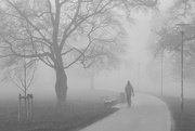 16th Feb 2018 - Foggy morning