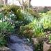 Margery Fish garden