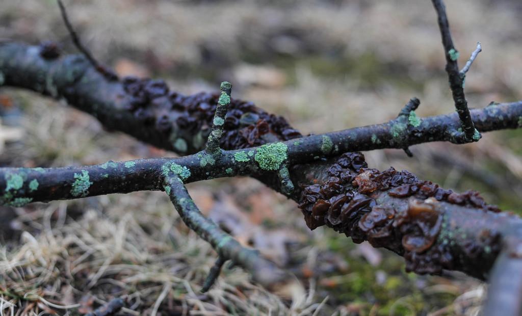 Winter Color 5 by loweygrace