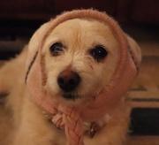 16th Feb 2018 - My Little Granny Doggy