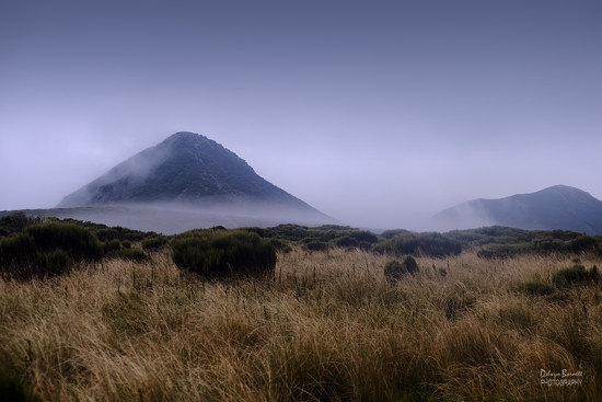 Alpine tussock and mist by dkbarnett