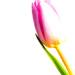 High key flora 1