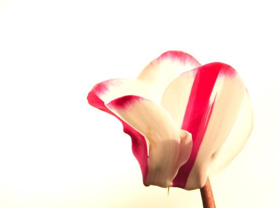 High key flora 2 by 365anne