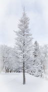 17th Feb 2018 - New Snow