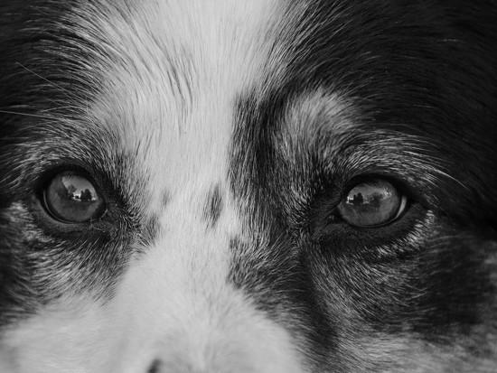 Eyes by salza
