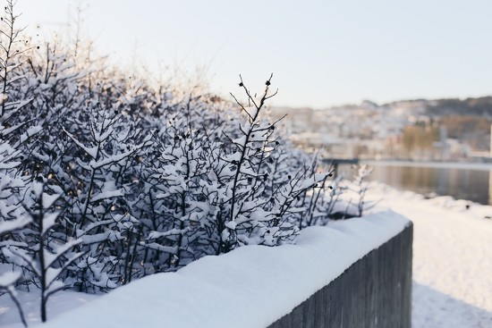 Fresh snow by anotherhouseblog