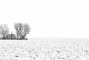 15th Feb 2018 - Winterlong