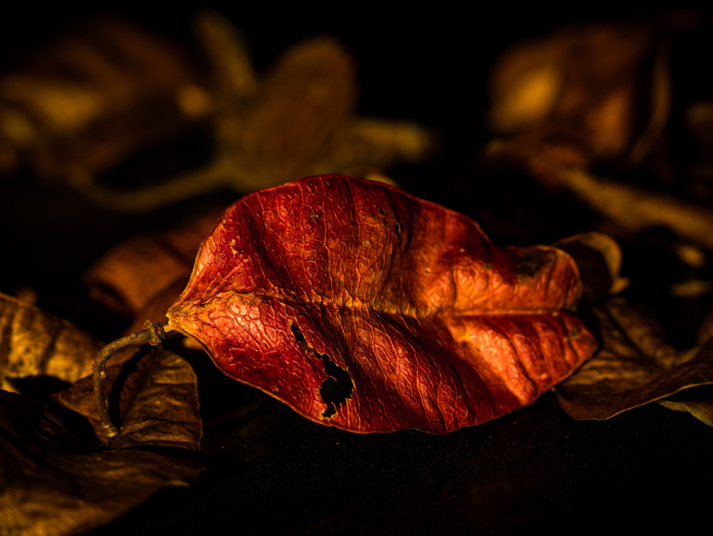 Memory of autumn by haskar