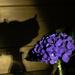 Still Life - Hydrangea