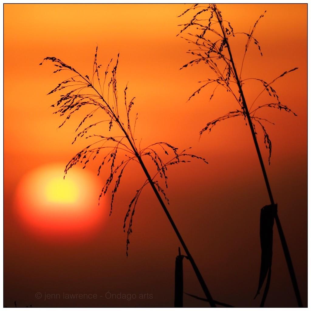 Sunset #214 by aikiuser
