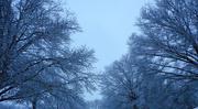 18th Feb 2018 - Sky 3 - Snowy sky