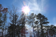 18th Feb 2018 - Spring Sunshine