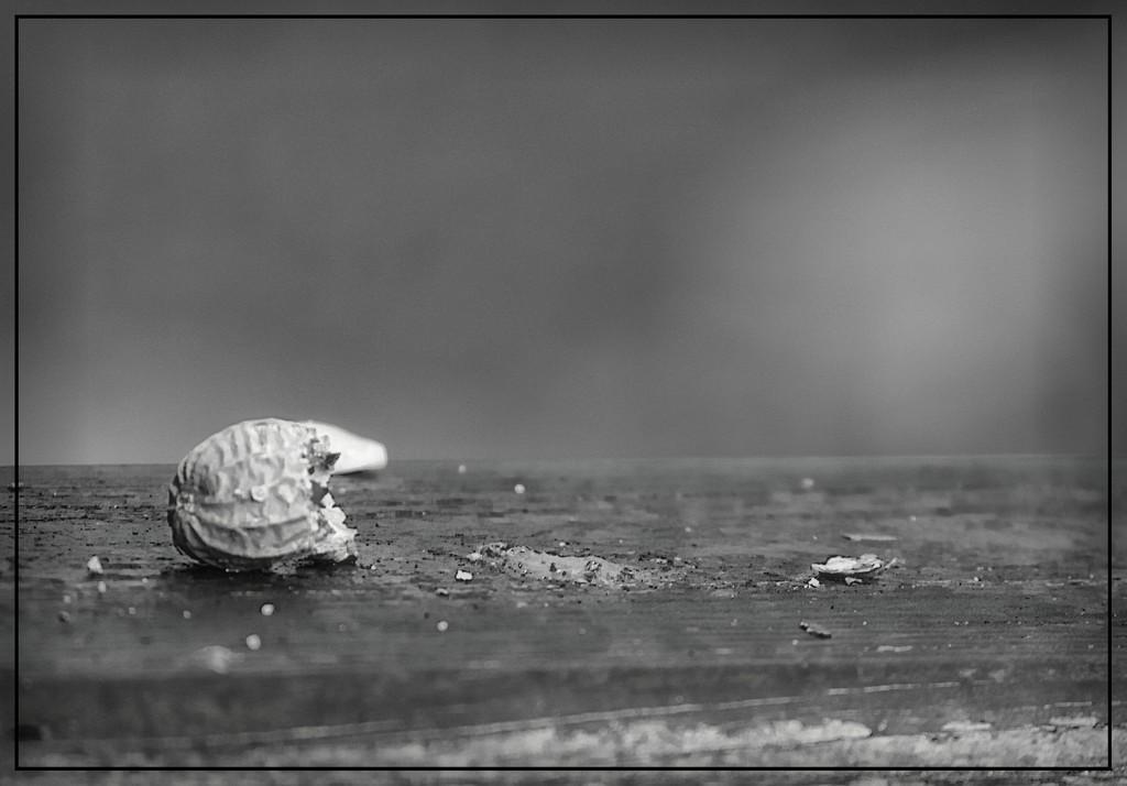 Peanut Shell by olivetreeann
