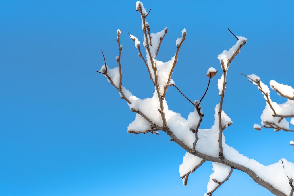 snowy branch by jernst1779