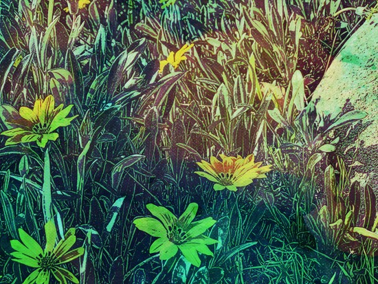 Abstract Flowers by kathyboyles