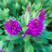 Purple and green zoom burst