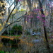 Tranquil scene at Magnolia Gardens, Charleston, SC by congaree
