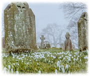 19th Feb 2018 - Churchyard Snowdrops
