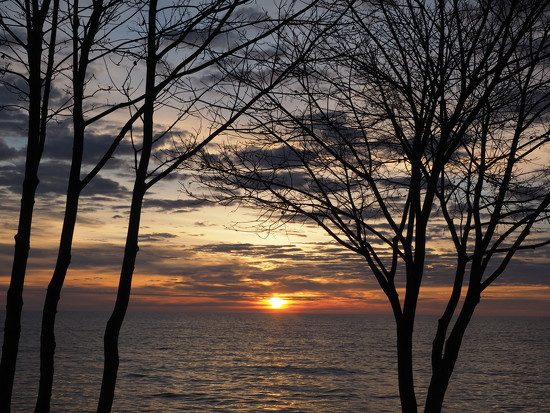 Trees and Clouds by selkie