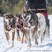 Dog Sled Racing by dridsdale