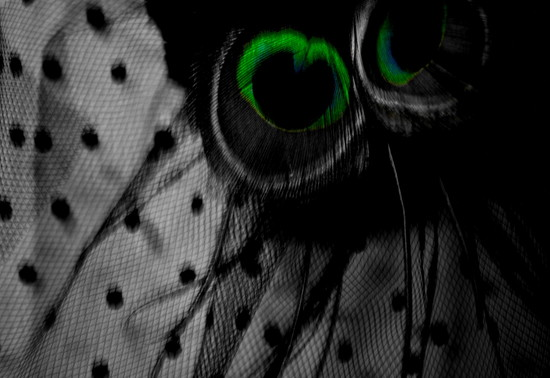 Green Eye on 365 Project