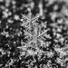dendrite snowflakes