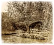 20th Feb 2018 - Beside The Canal Bridge