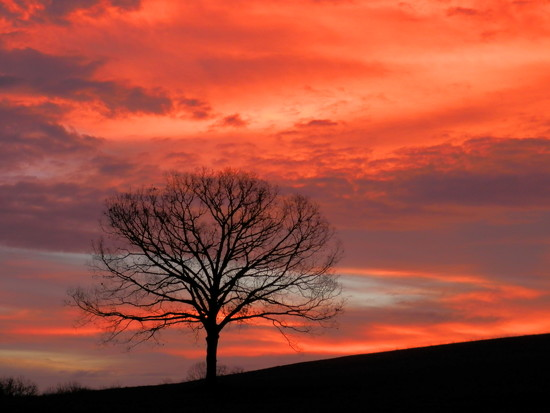 Sunrise by julie