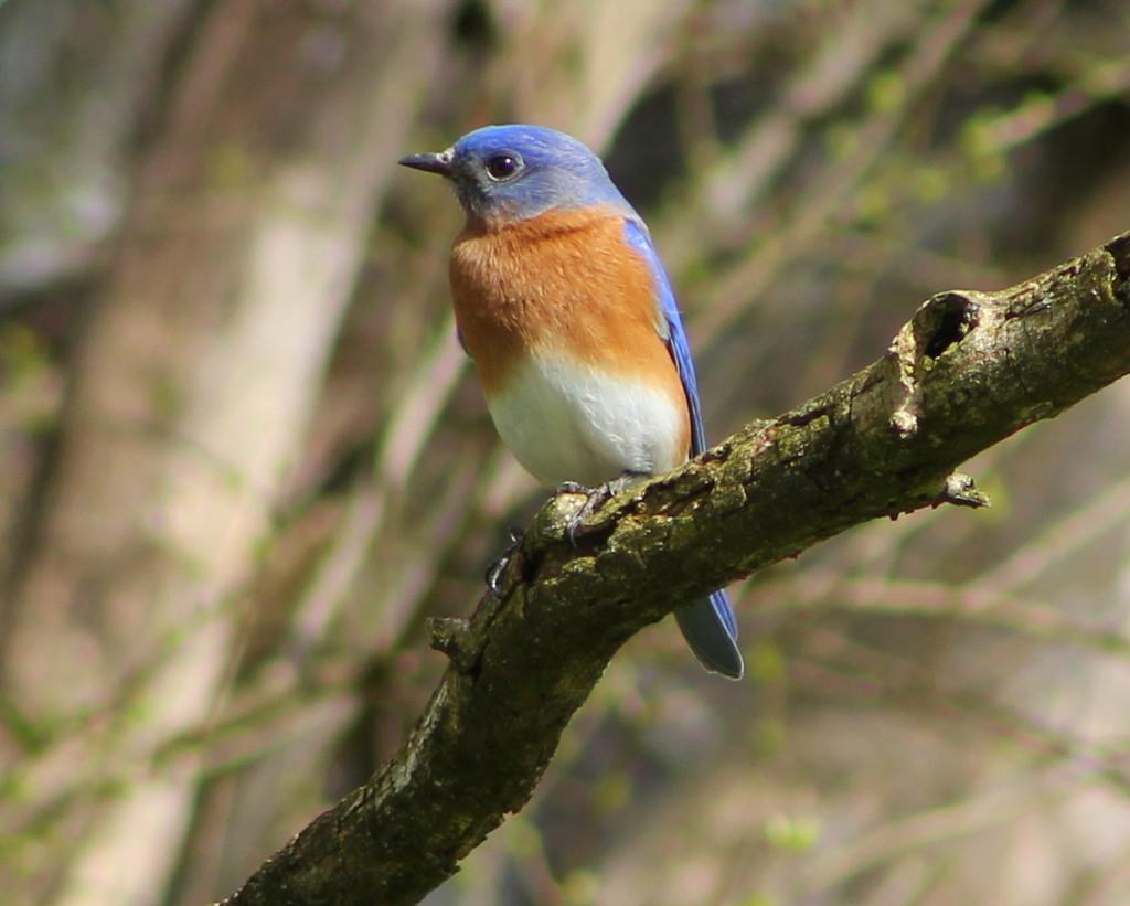 Bluebird Day by cjwhite