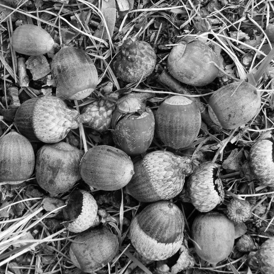 Little Acorns Everywhere by linnypinny