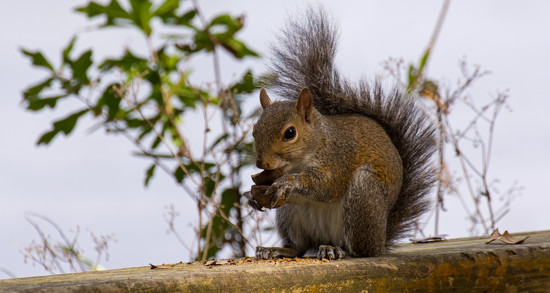 Mrs Squirrel Having Lunch! by rickster549