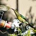A White eye and Malachite Sunbird..... by ludwigsdiana