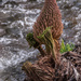 049 - Growing on the cliff tops