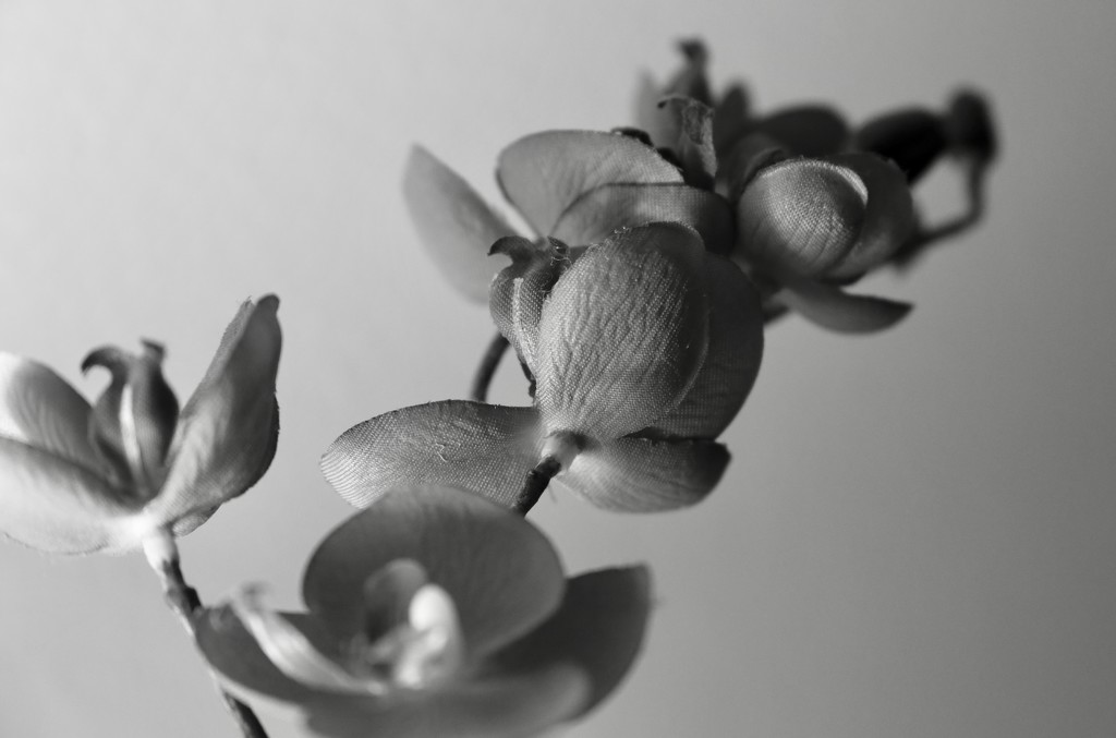Flash of Orchid by phil_sandford