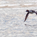 Goldeneye Low Water Flight