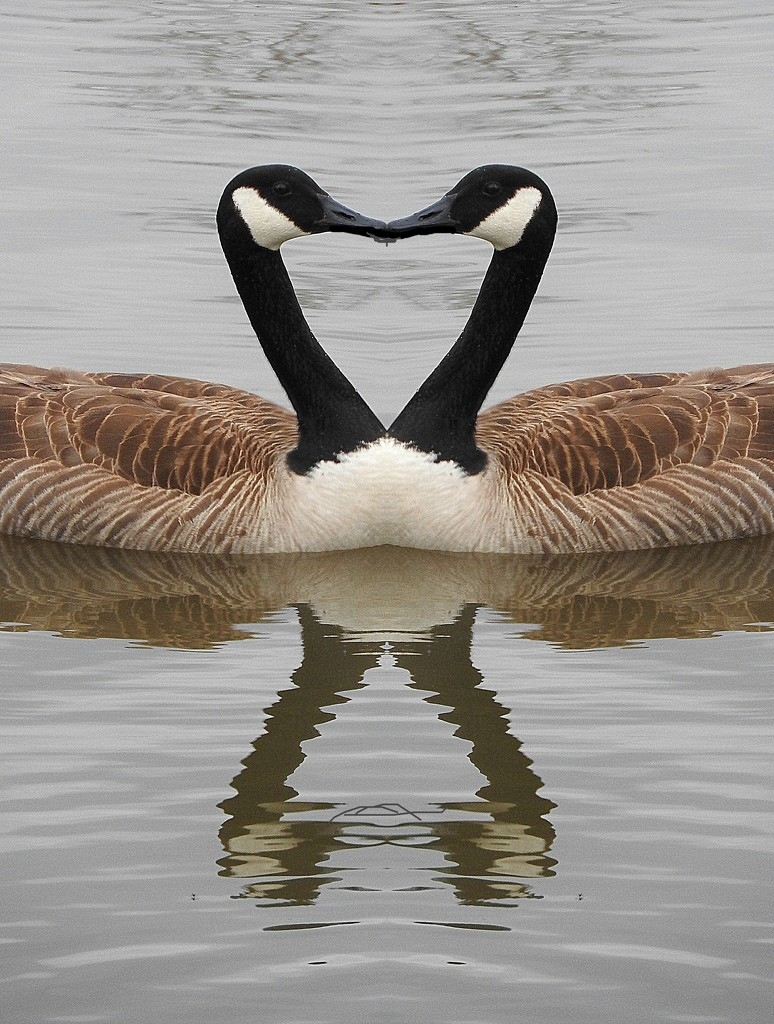 Goose heart by homeschoolmom