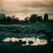 cox's meadow