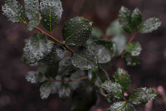 Rainy Day by loweygrace