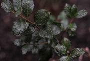 22nd Feb 2018 - Rainy Day