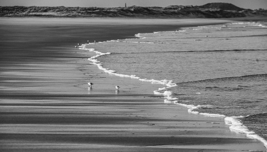 Sea, sand and sanderlings by inthecloud5