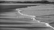 22nd Feb 2018 - Sea, sand and sanderlings