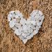 Heart #22