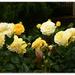 Muriels Rose...