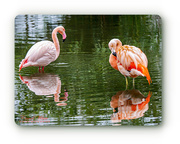 23rd Feb 2018 - Flamingoes And Reflections
